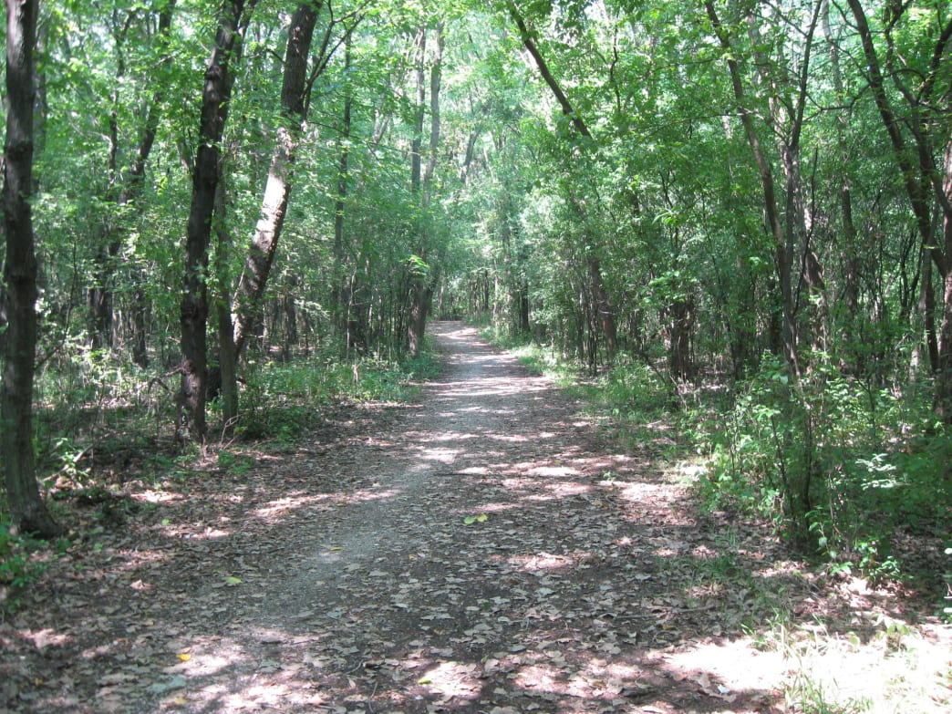 Deer Grove Forest Preserve offers the best trail running in the northern suburbs.
