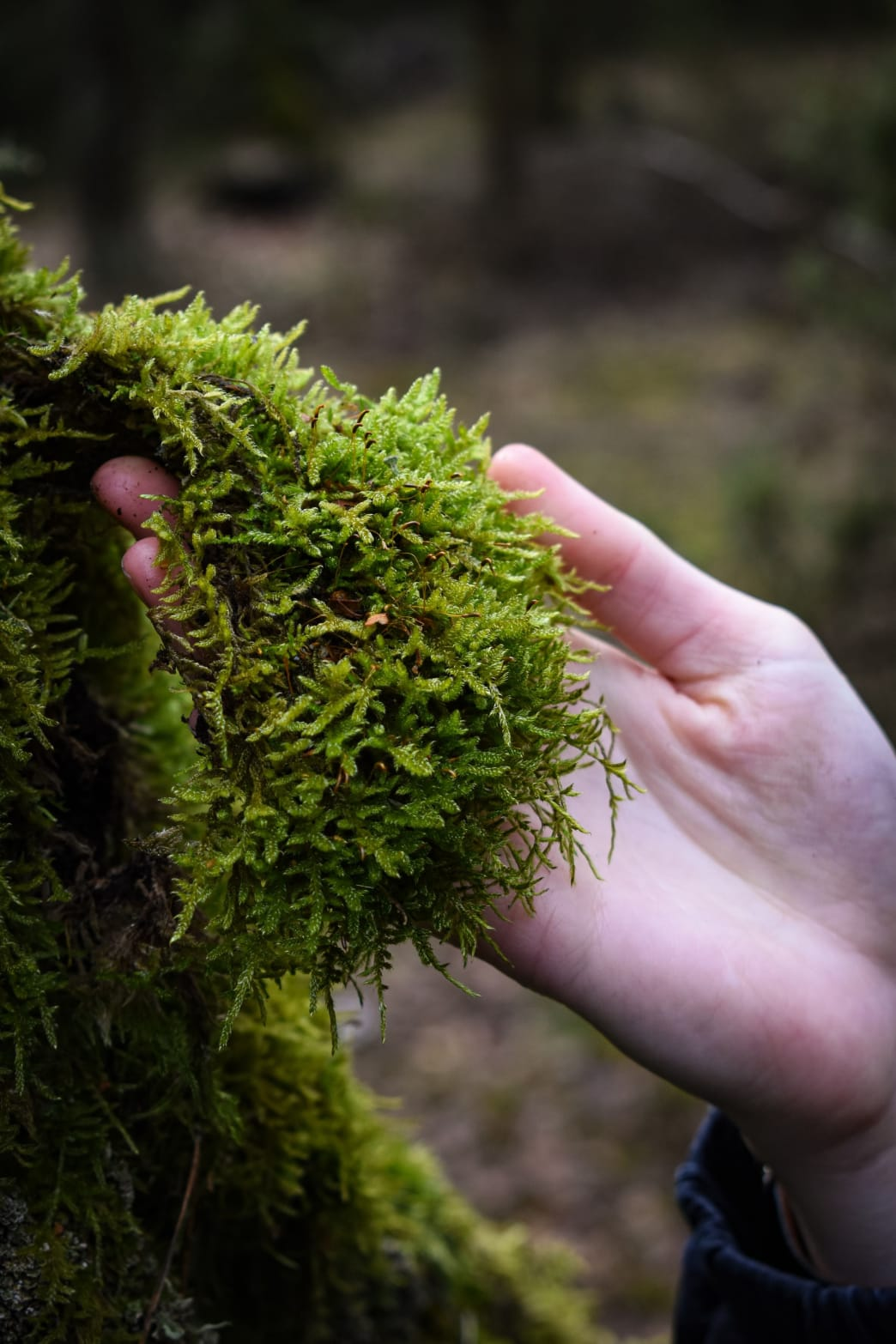 A handful of soft moss is just the thing.