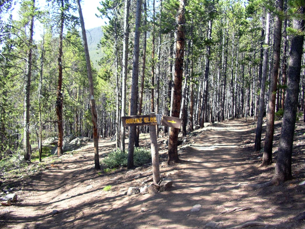 The lower portion of the Mount Elbert Trail where it splits from the Colorado Trail.