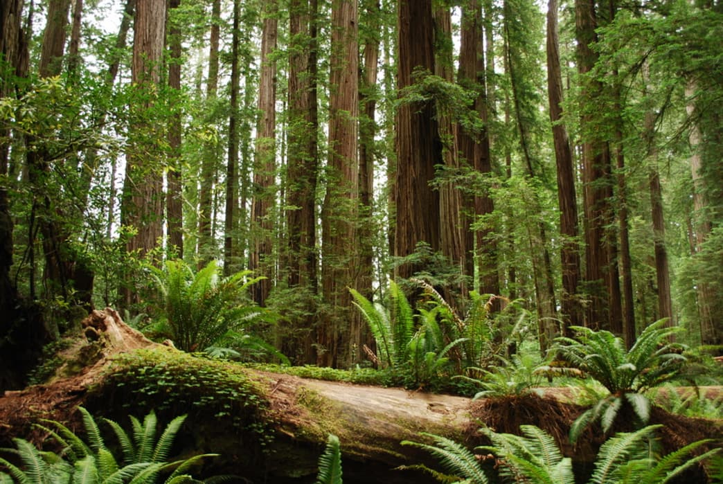 Orr Hot Springs is tucked into the Redwoods of the Mendocino Hills.