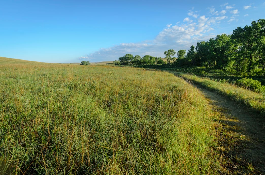 There's only a small percentage of the tallgrass prairie ecosystem left in the United States.
