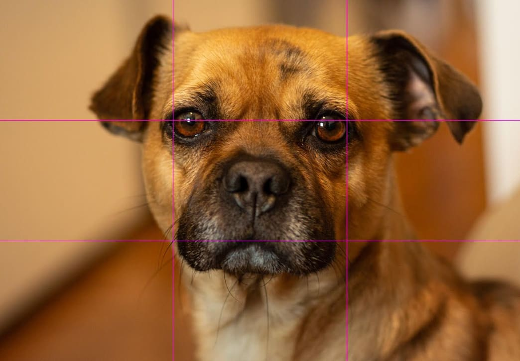 Let Bing's eyes stare through the rule of thirds grid and straight into your heart.