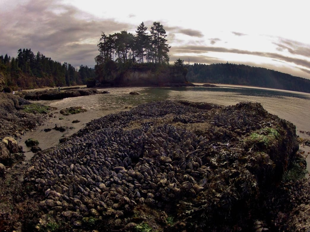 Exploring tide pools and enjoying the sea stacks at Salt Creek on the Strait of Juan De Fuca