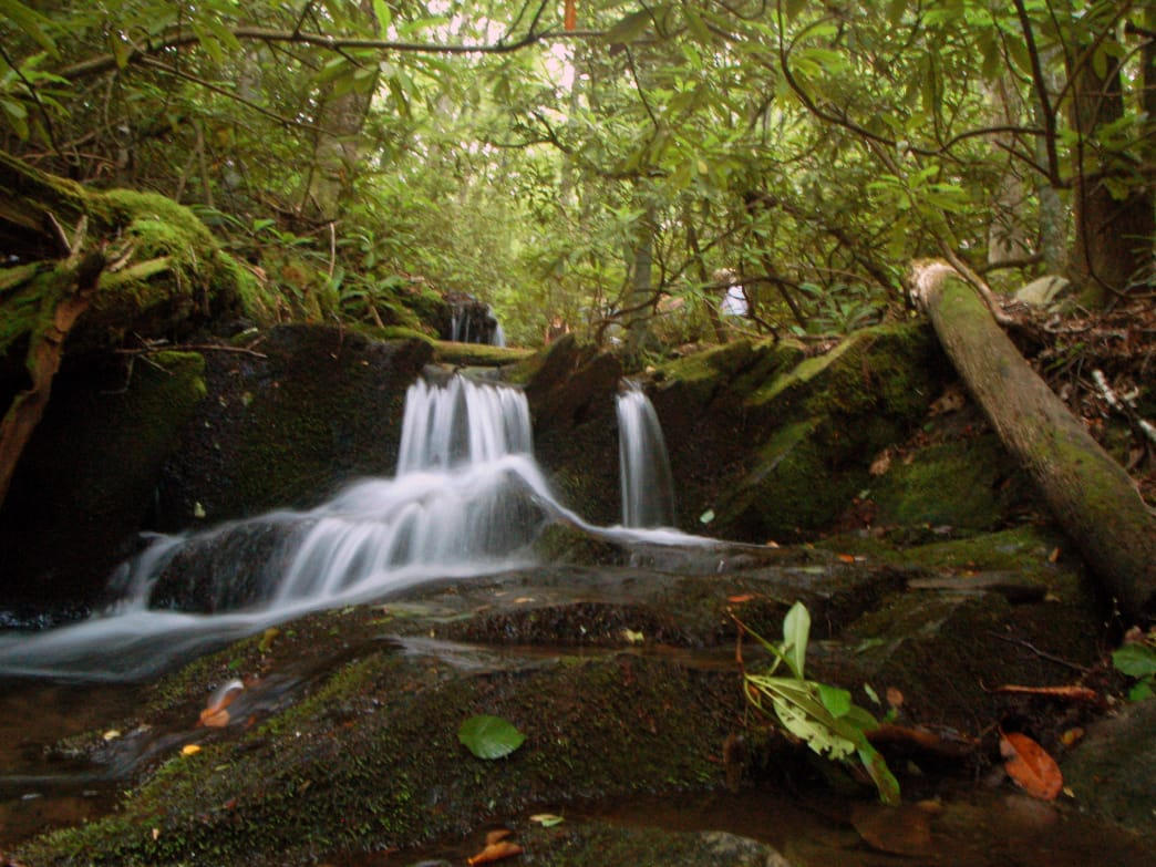 Start by hiking the miles of trails just off the Blue Ridge Parkway, like Boone Fork trail.