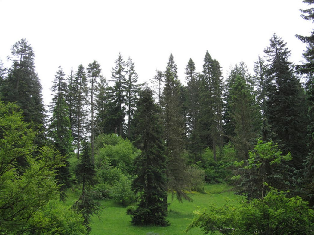 Hoyt Arboretum hosts more than 1,000 species of trees.