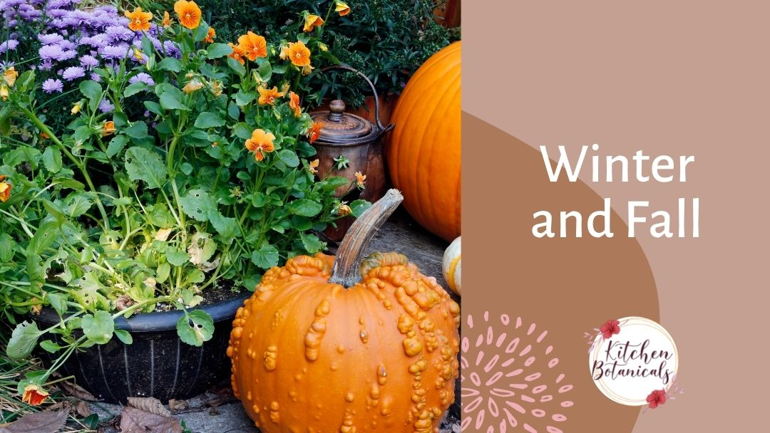 Growing vegetables in fall and winter in Florida - Kitchen Botanicals