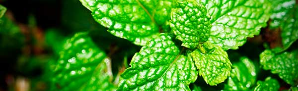 peppermint tea for anxiety